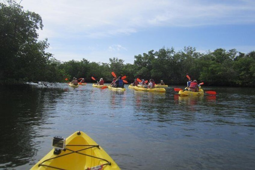 Show item 4 of 6. Guided Kayak Tour- Manatee and Dolphin sightings