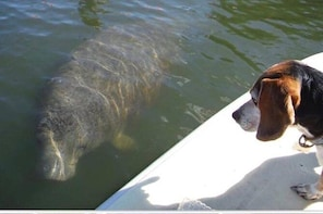 Guided Kayak Tour- Manatee and Dolphin sightings