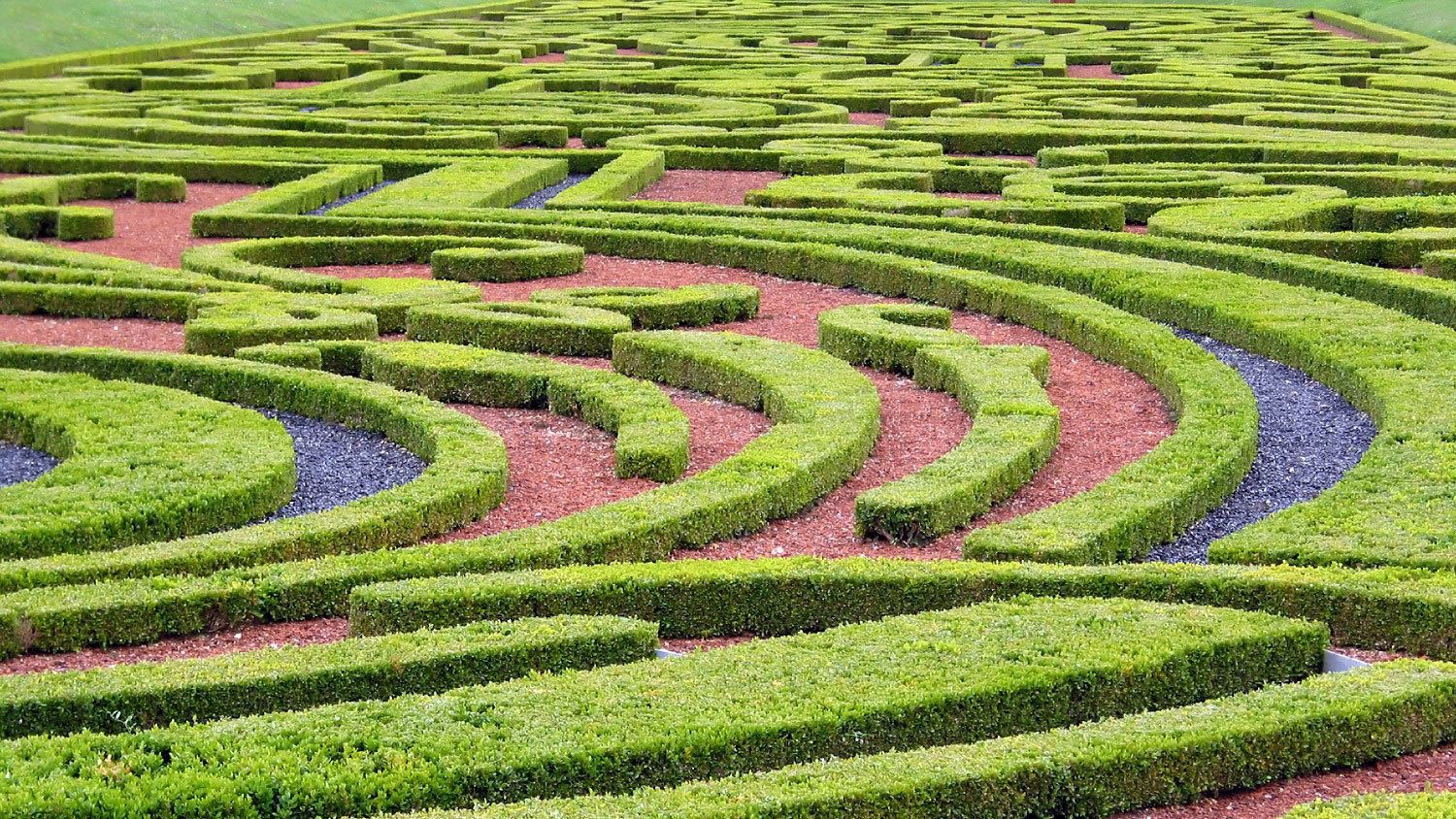 Closeup of a shrubbery maze in the gardens of Vaux Le Vicomte.