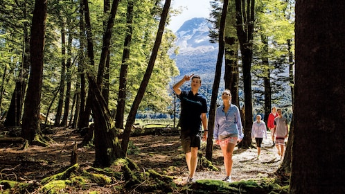 hiking in the woods in New Zealand