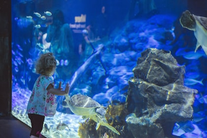 A child watches one of the turtles in Turtle Rescue.jpg