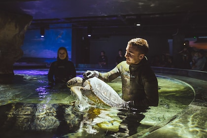 One of the green sea turtles goes into its new Turtle Rescue display.jpg