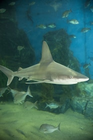 Melbourne Shark Dive Xtreme Experience