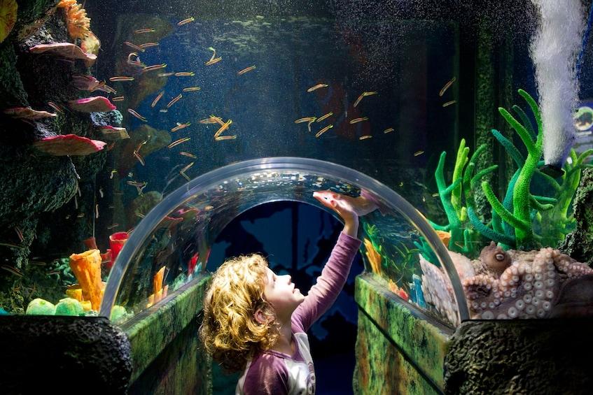 Show item 1 of 9. SEA LIFE Melbourne Aquarium Tickets