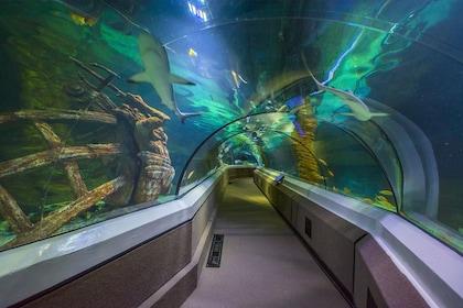 Oceanarium Sharks.jpg