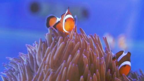Close view of fish at the Mooloolaba Sea Life Underwater World on the Sunshine Coast