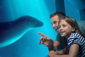 SEA LIFE Sunshine Coast General Admission