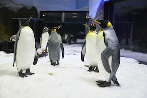 Biglietti per il SEA LIFE Sydney Aquarium