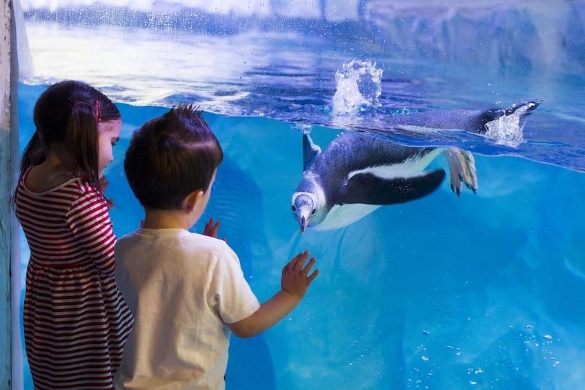 Show item 2 of 9. SEA LIFE Sydney Aquarium Tickets