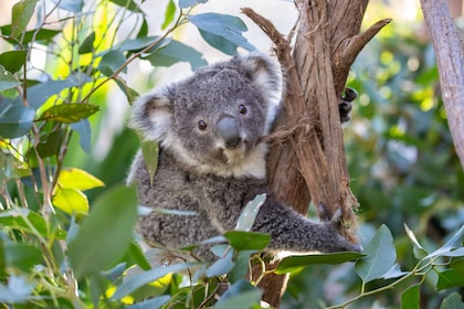 WILD LIFE Sydney Zoo - Fast Track Admission