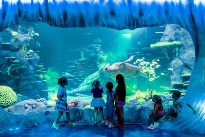 A massive loggerhead turtle swims by in all new Day and Night on the Reef exhibit.jpg