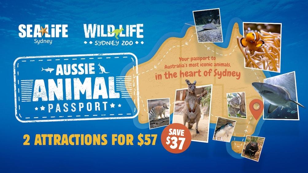 Carregar foto 1 de 6. Sydney Attractions Pass including SEA LIFE Sydney Aquarium