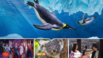 Sydney Attractions Pass including SEA LIFE Sydney Aquarium