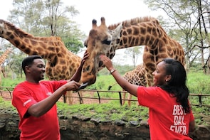 Small-Group Giraffes & Elephants in Nairobi Tour