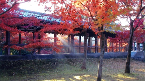 Maple trees in Tokyo