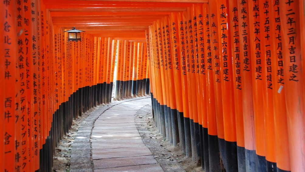 Show item 2 of 10. Orange lined trail in Tokyo
