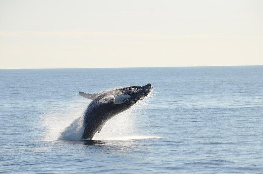 Whale-Watching Cruise in Stellwagen Bank Marine Sanctuary