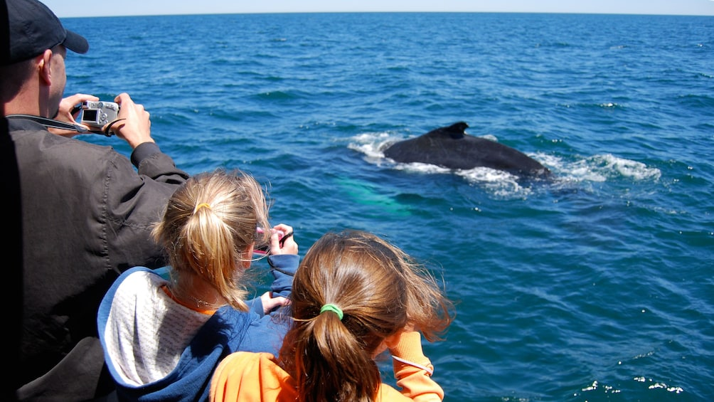 Show item 3 of 5. Whale watching cruise passengers taking photos of a surfacing Minke Whale off the coast of Boston