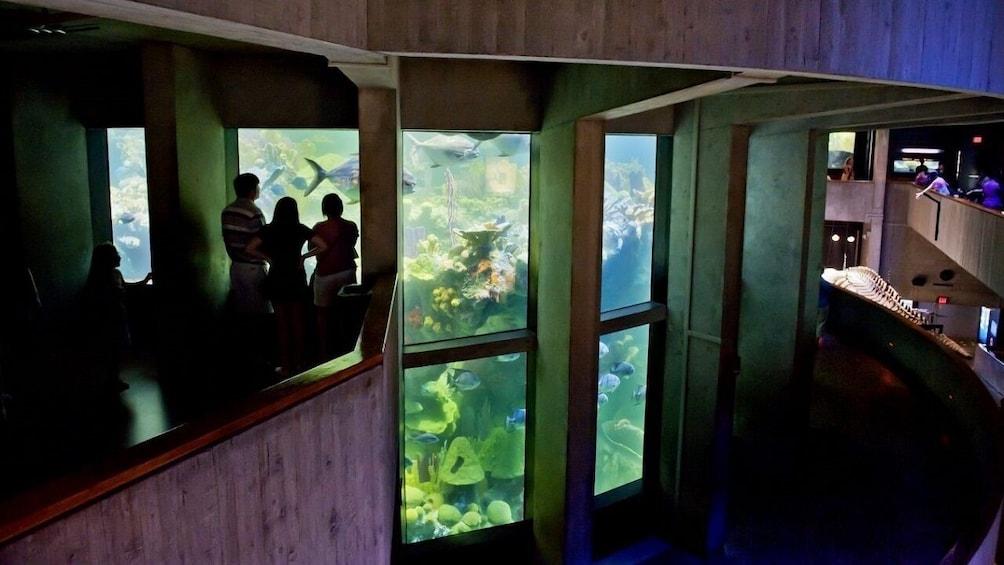 Charger l'élément 4 sur 10. New England Aquarium Admission