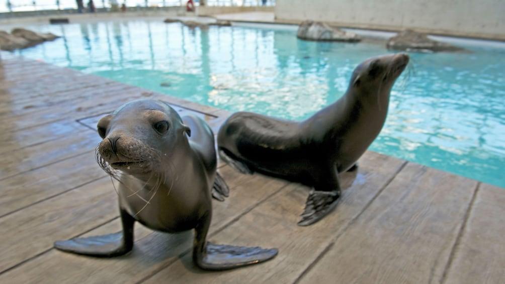 Charger l'élément 3 sur 10. Pair of seals at the New England Aquarium in Boston