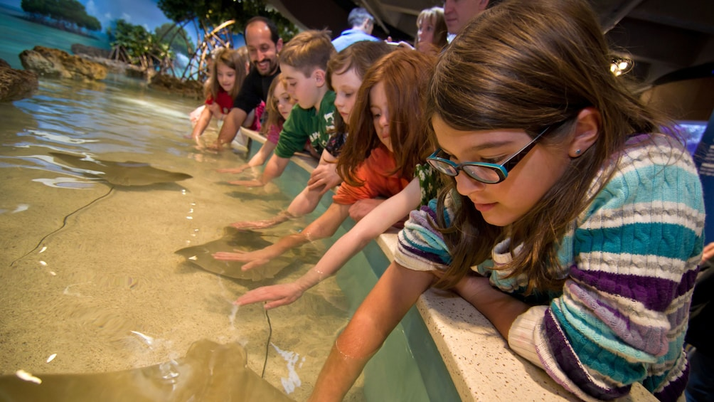 Cargar ítem 1 de 10. Kids petting cownose rays at at touch tank in the New England Aquarium in Boston