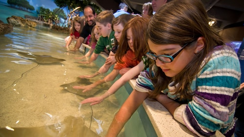 Kids petting cownose rays at at touch tank in the New England Aquarium in Boston