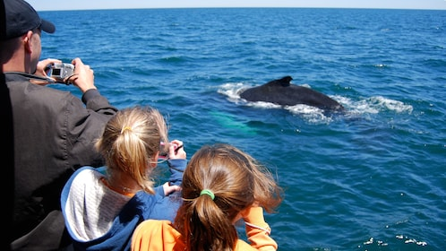 Whale watching cruise passengers taking photos of a surfacing Minke Whale off the coast of Boston
