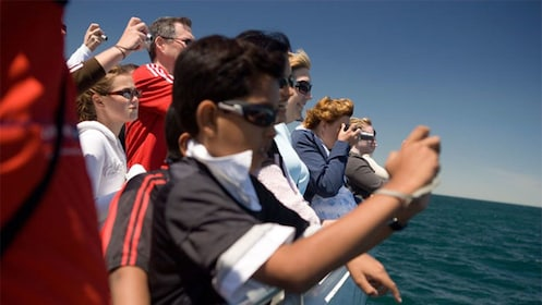 Passengers taking photos from the deck of a whale watching cruise in the Boston Harbor