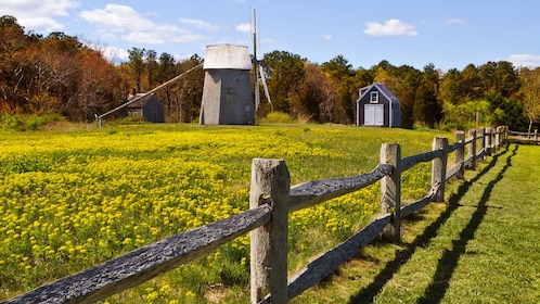 Windmill and long fence in a field of flowers in New England