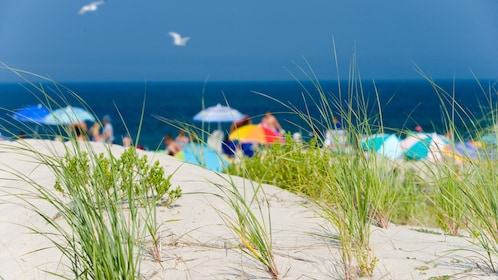 Looking out at beachgoers from the grassy dunes along the coast of New England