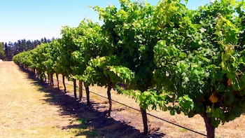Margaret River Wineries Day Tour from Perth