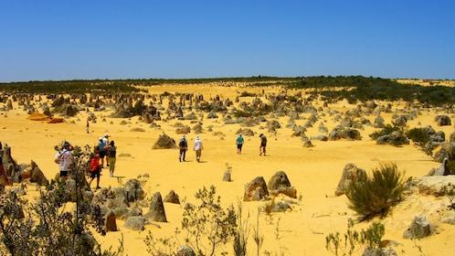 people walking around rock formations in the Pinnacles desert