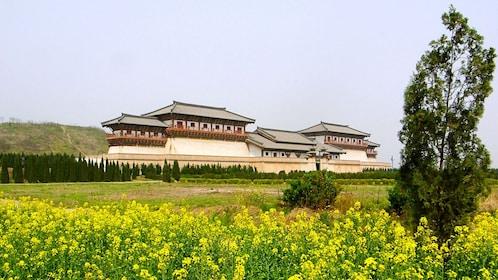 flower field in xian