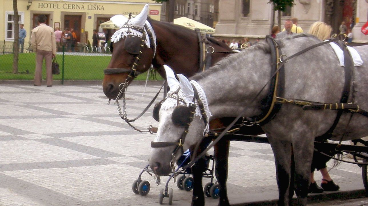 Private Horse-Drawn Carriage Ride