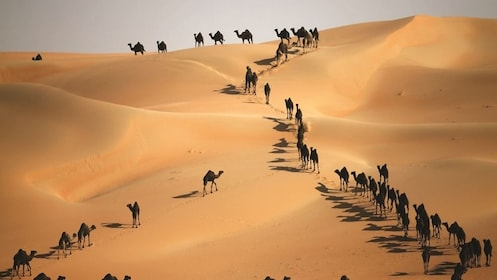 LIWA DESERT SAFARI-01.jpg