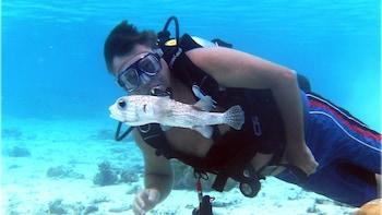Rarotonga Lagoon Dive Experience