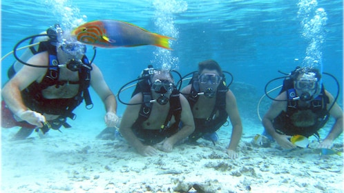 scuba divers watching colorful fish in Cook Islands