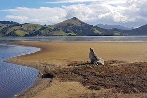 Dunedin and Otago Peninsula Wildlife Tour with Optional Larnach Castle Visi...