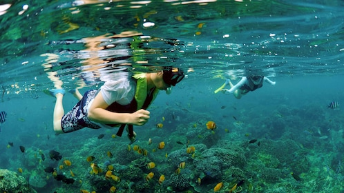 Snorkeling couple over the coral reef in Bali