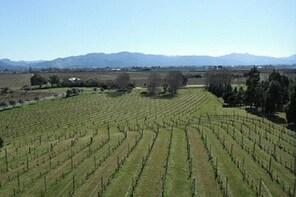Picton Shore Excursion Marlborough Wine Region Small-Group Tour