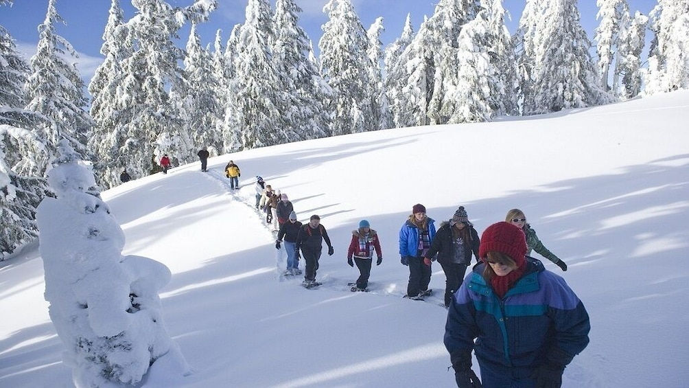 Show item 2 of 7. Sila National Park: half day with snowshoes and expert guide