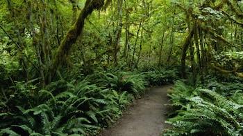 St. Lucia Rainforest Walk