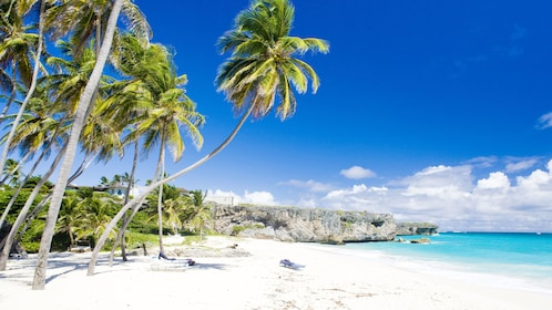 Palm trees along a white sand beache in St Lucia