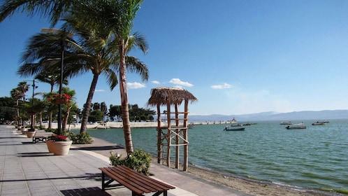 Palm trees along the shoreline of Lake Chapala in Guadalajara