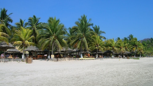 Sandy beach lined with umbrellas and palm trees