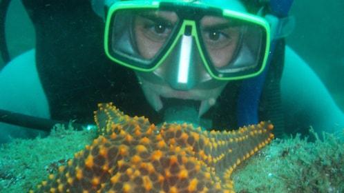 Snorkeler looking at large starfish in Ixtapa
