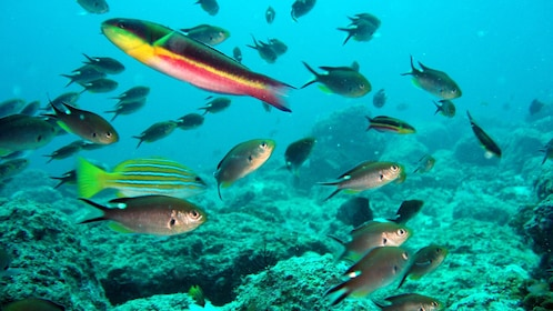 Colorfish and coral reef in Ixtapa