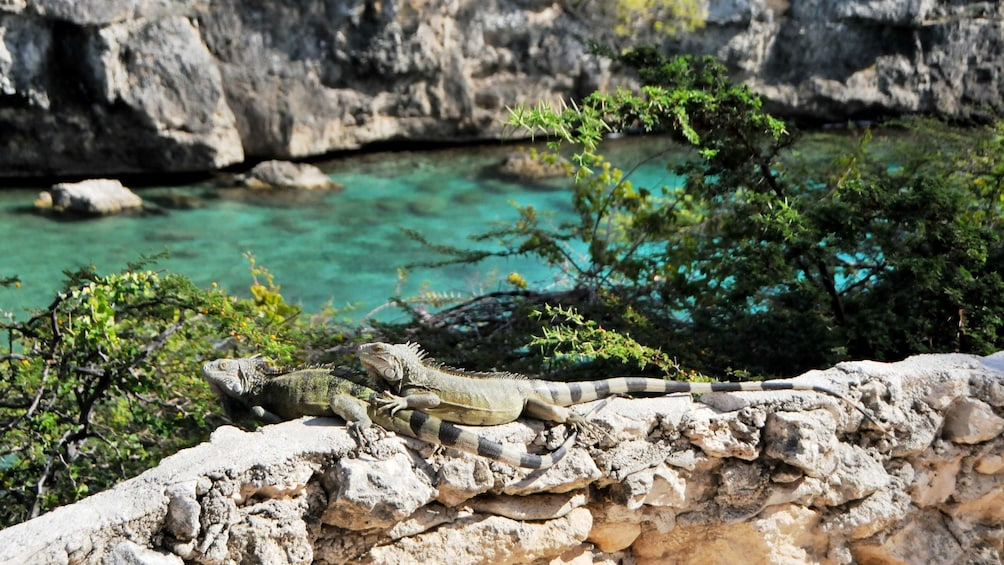 Foto 4 von 5 laden Calming scene of the blue waters and rock formations in Curacao