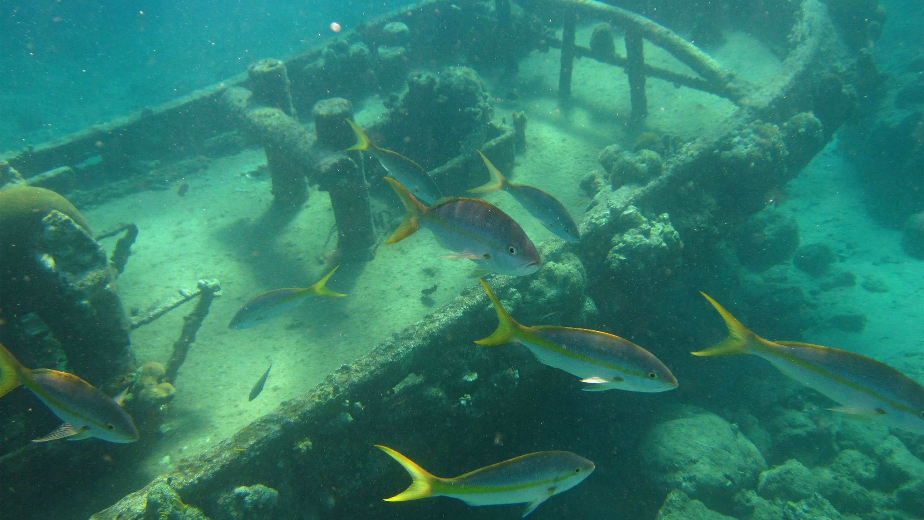 Picturesque sunken tugboat with fish swimming by in Curacao