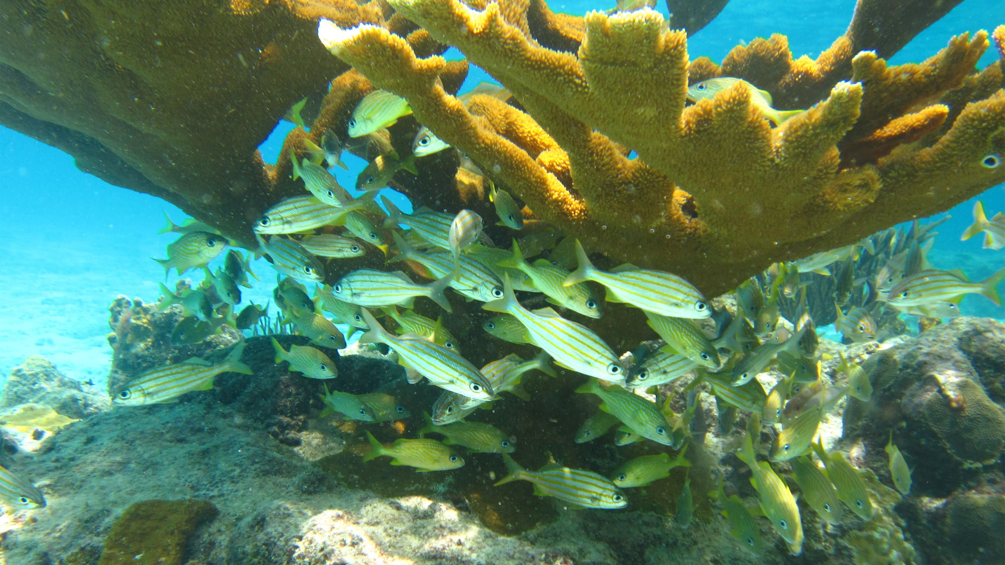 Underwater view of reefs and fish in Curacao